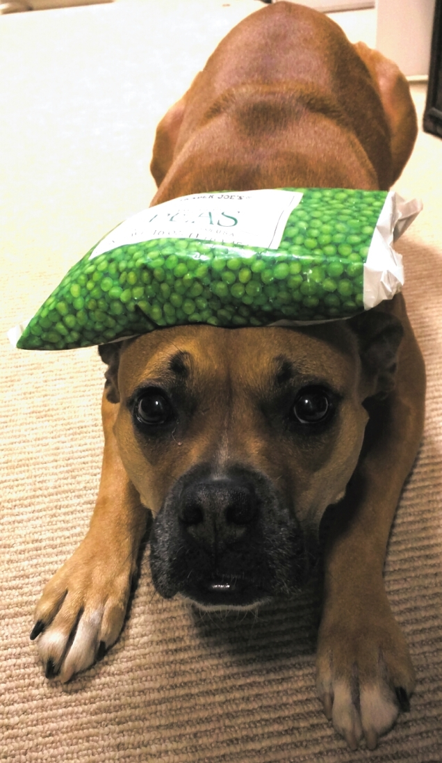 dog with peas on head